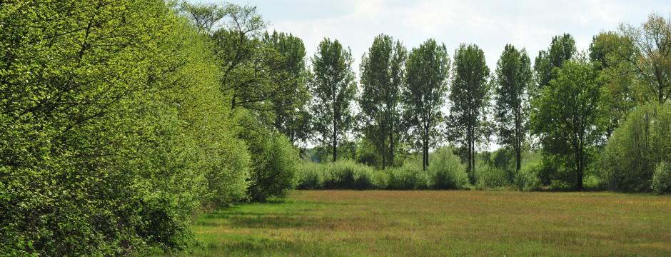 Natuurreservaat het Aaltense Goor